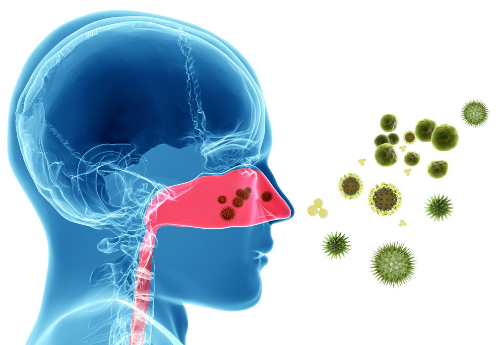 graphic that shows pollen entering the sinus cavities