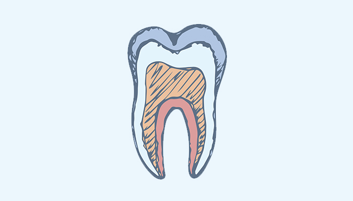 contents of a tooth